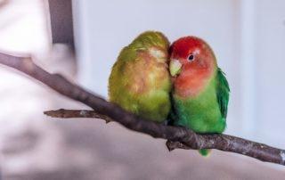 Partner, langfristige Zusammenarbeit